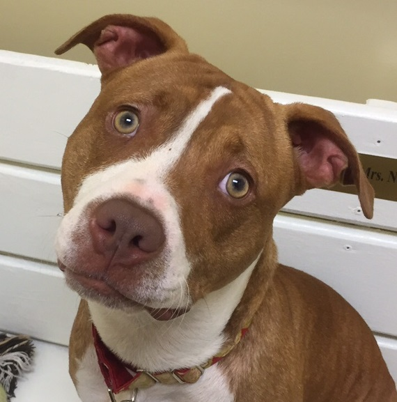 Bree is up for adoption in Tennessee!