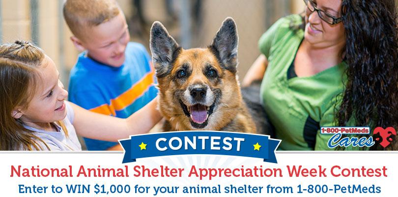 1-800-PetMeds Shelter appreciation week contest