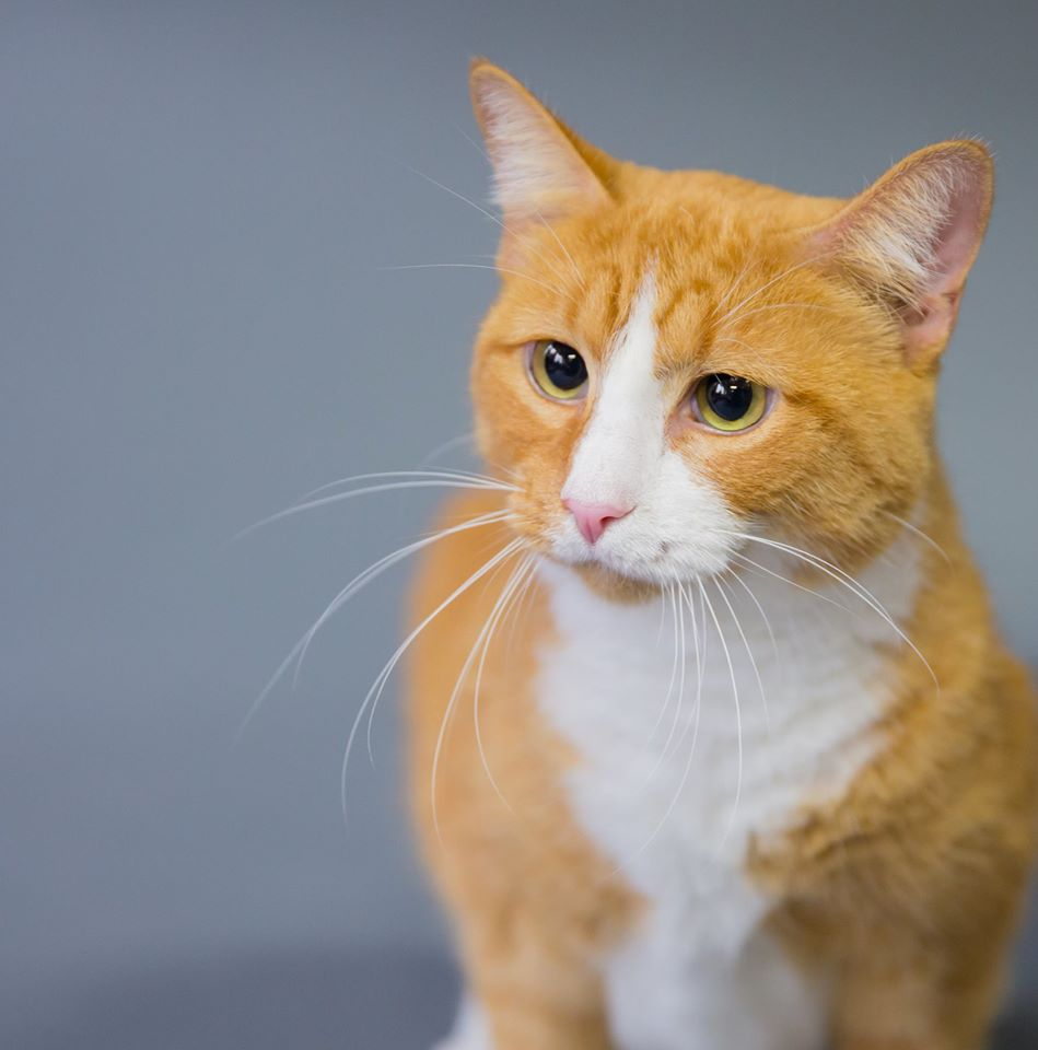 Is Cutie the cat for you?
