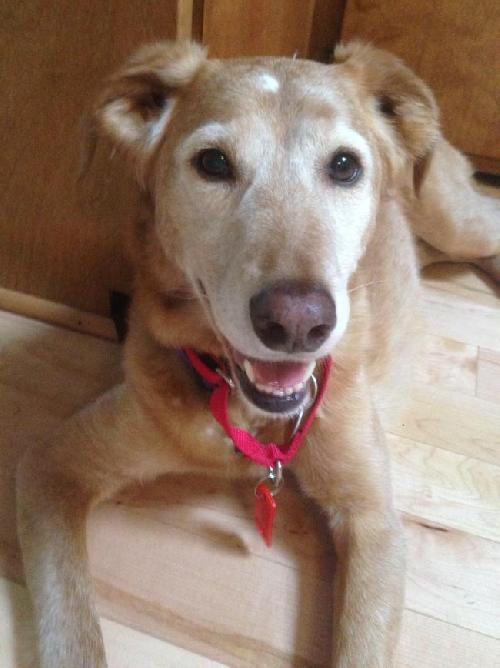Friendly Lily is looking for a forever home!