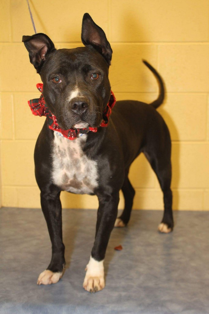 Eleanor is up for adoption in TN.