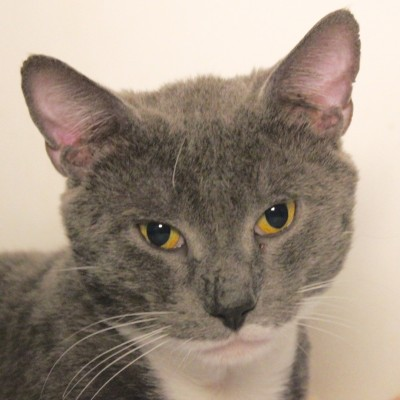 Tolouse is looking for a home in CT!