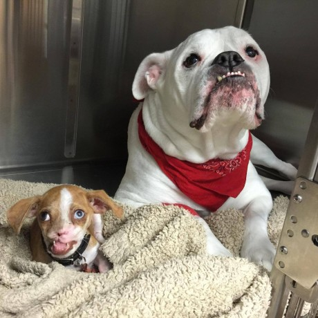 National Animal Shelter and Rescue Appreciation Week | 1 ...