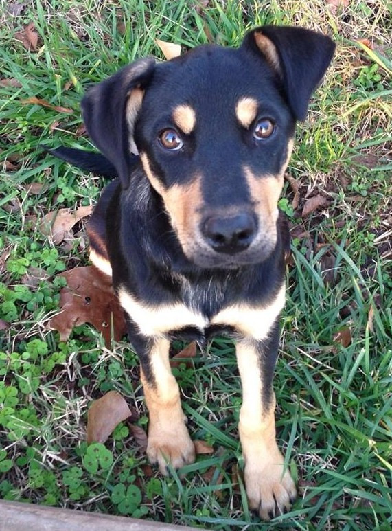 4-month-old Lucy Lu is looking for a home in SC!
