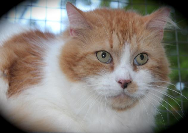 Griffin is an adoptable 9-year-old cat.