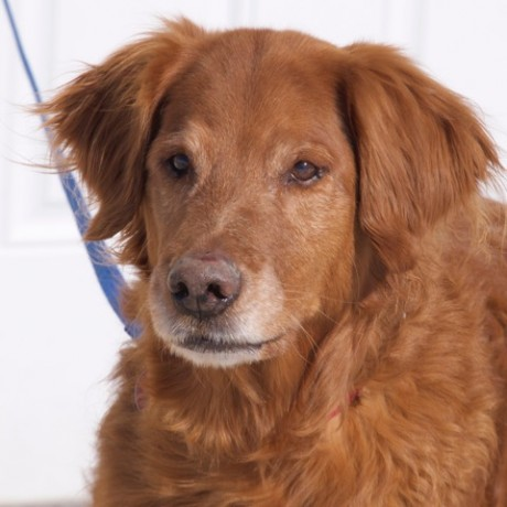 Buddy is looking for a home in Arvada, CO.