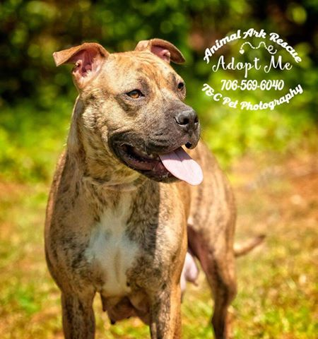 Tiger Lilly is adoptable in Columbus, Ga.!