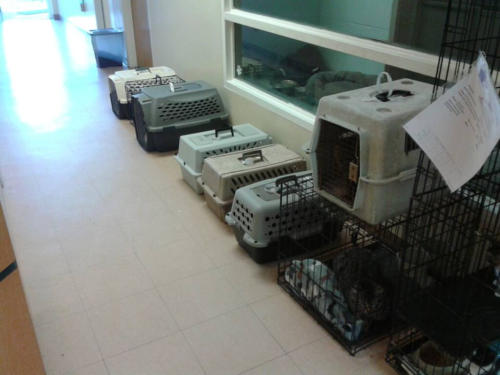 Blind Cat Rescue & Sanctuary's entry for the Spring into Action Spay/Neuter Contest