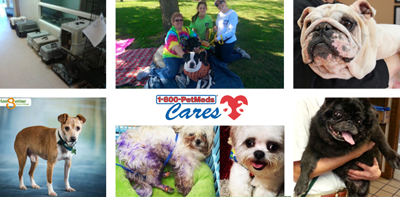 Winners of past 1-800-PetMeds Cares™ grants
