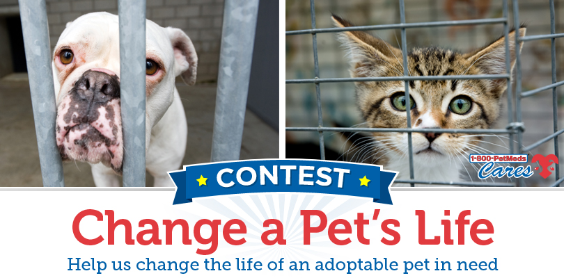 Third annual 1-800-PetMeds Cares™ Change a Pet's Life Contest
