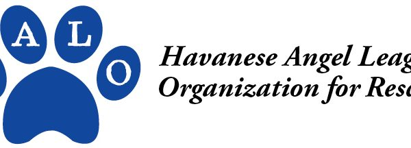 Havanese Angel League Organization for Rescue logo