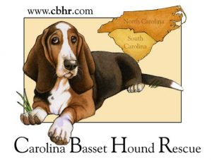Carolina Basset Hound Rescue Logo