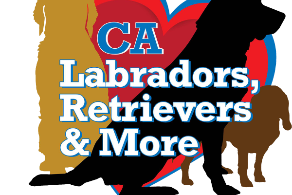 Labs and More Logo