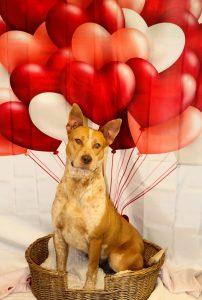 Shelter Spotlight Coos County Animal Shelter 1 800 Petmeds Cares