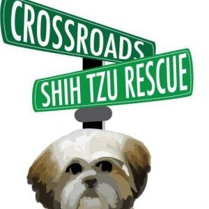 Shelter Spotlight Crossroads Shih Tzu Rescue 1 800 Petmeds Cares